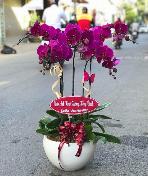 hoa tang sinh nhat bo me