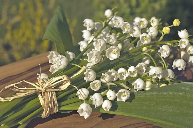 hoa lan chuong