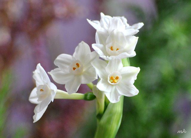 hoa thuy tien trang