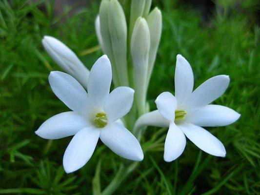 y nghia hoa hue