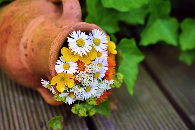 su tich hoa cuc viet nam