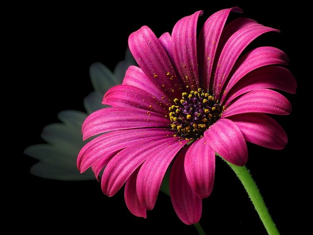su tich hoa cuc