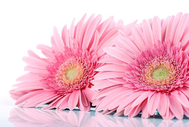 y nghia hoa hoa dong tien trong phong thuy